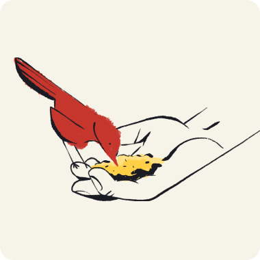 bird eating seed from a hand illustration